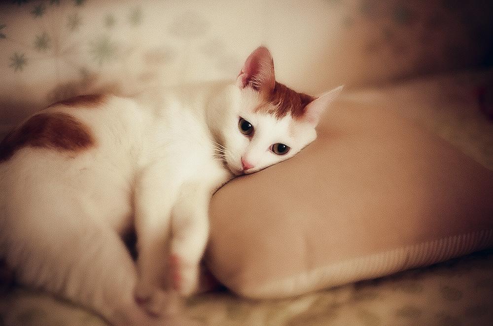 Глисты у кошек: симптоматика и лечение