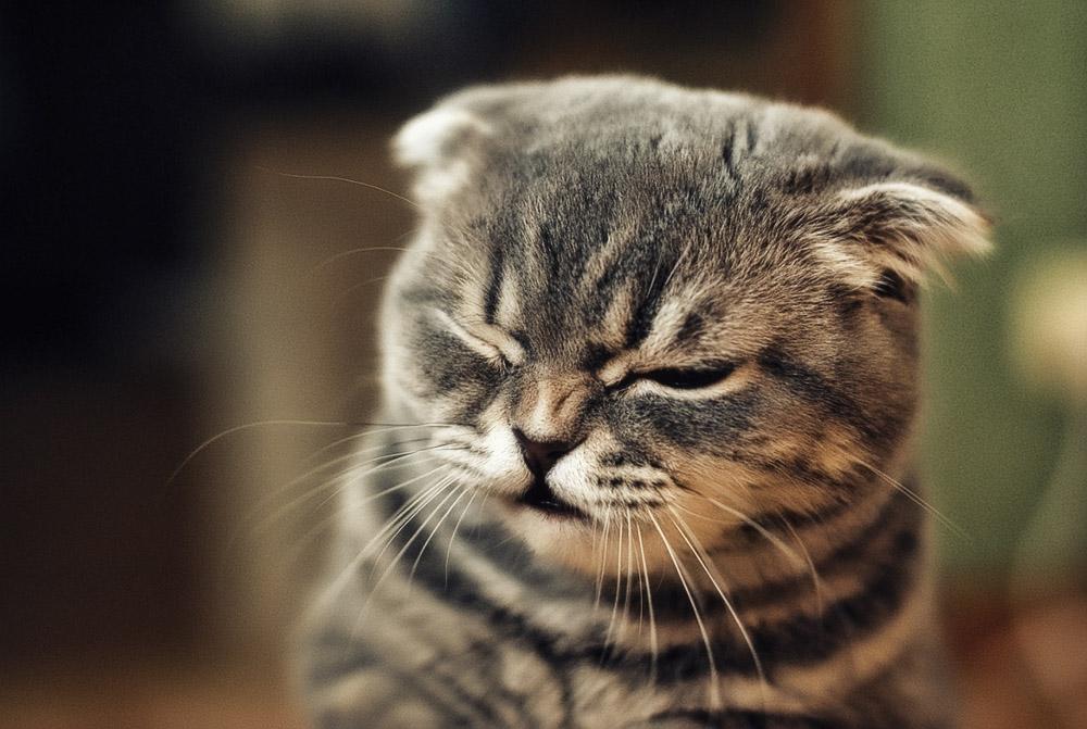 Причины возникновения аллергии у кошки и способы её устранения