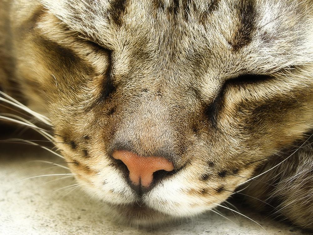 Кожные заболевания у кошек - фото и лечение
