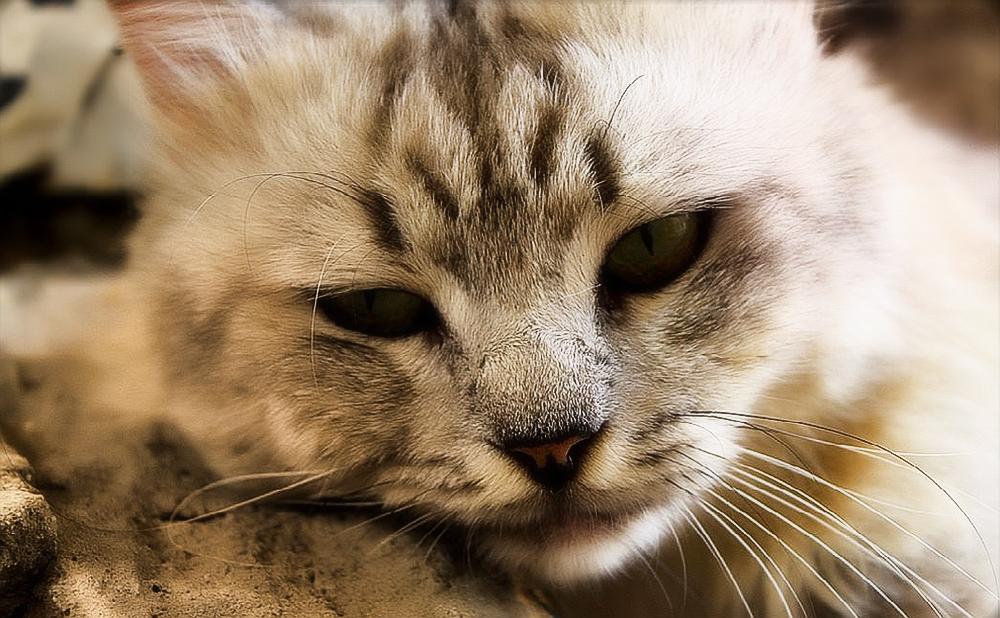 Отравление у кошек - симптомы и лечение