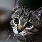 http://catspaw.ru/wp-content/uploads/2016/02/Regina-61.jpg
