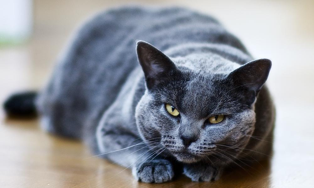 Мазь ям бк для кошек от лишая