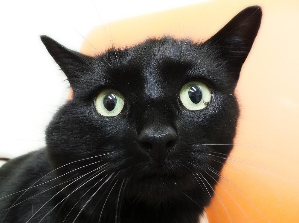Абсцесс у кошки и его лечение