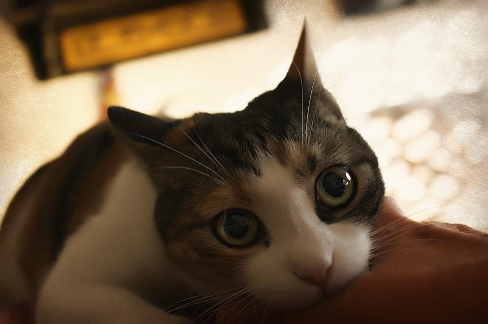 Чем лечить укус кошки?