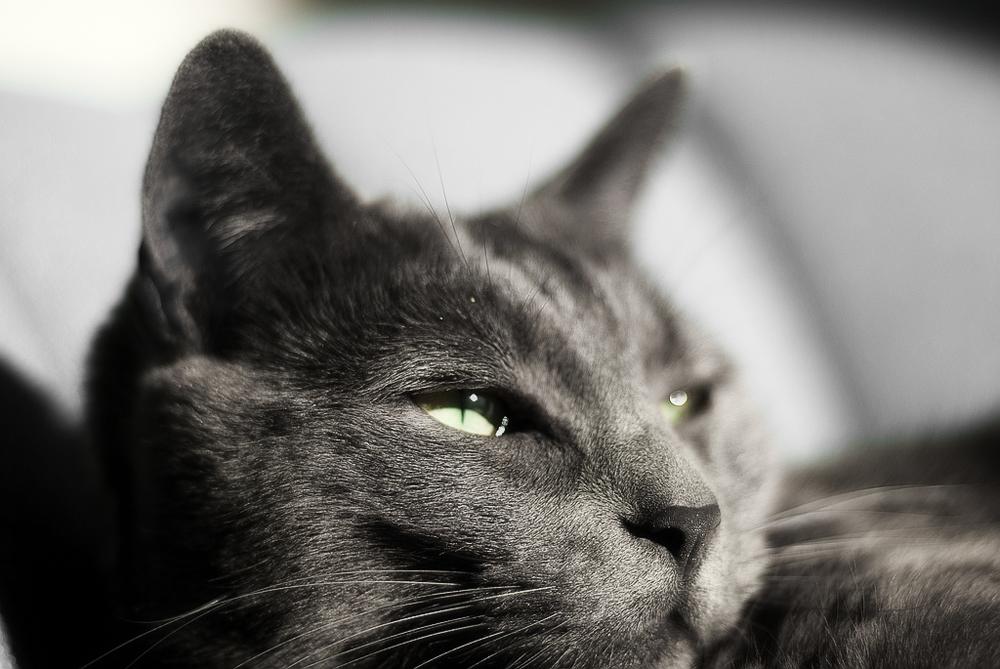 Средство от блох у кошек: как выбрать самое эффективное?