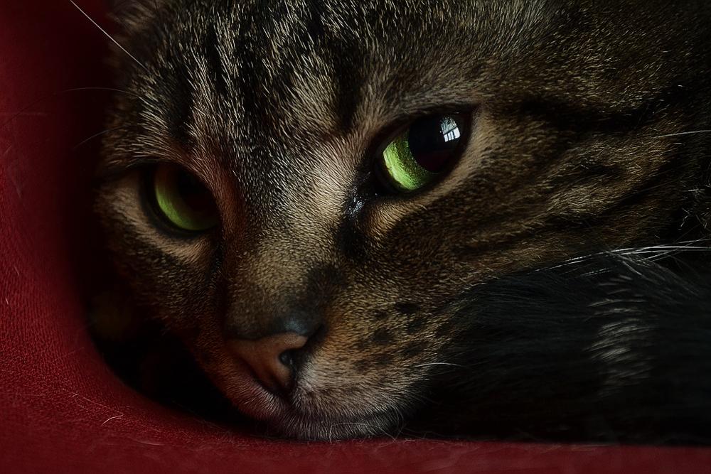 Как применять вазелиновое масло при запорах у кошек?