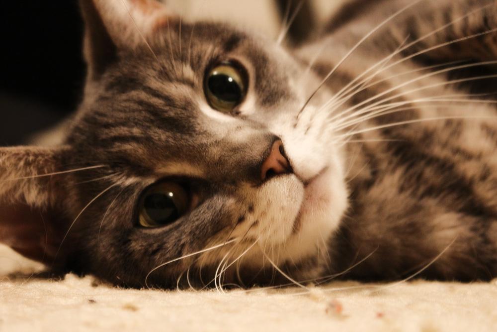 Снизить гиперсексуальность у кота