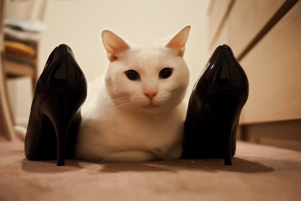 Как вывести запах кошачьей мочи из обуви?