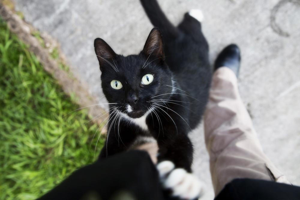 Гестренол для кошек: инструкция по применению