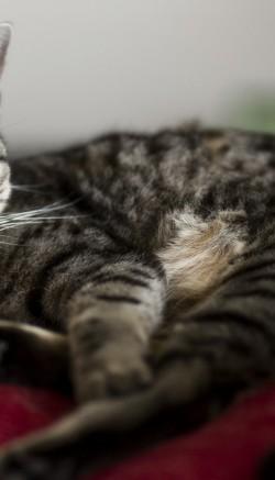 Корм для кошек диетический Hills