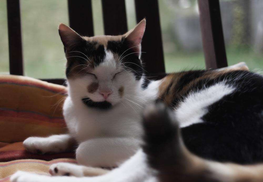Успокаивающие капли Фитекс для кошек: инструкция, отзывы