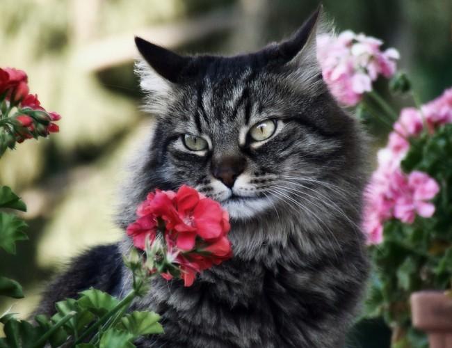 Ядовитые растения для кошек и опасные комнатные цветы