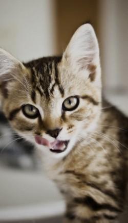 Автокормушка для кошек своими руками
