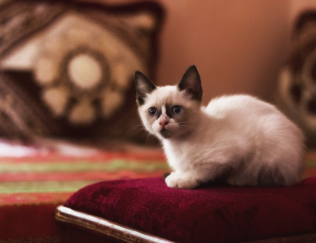 Клички для котов и кошек: определяемся с выбором