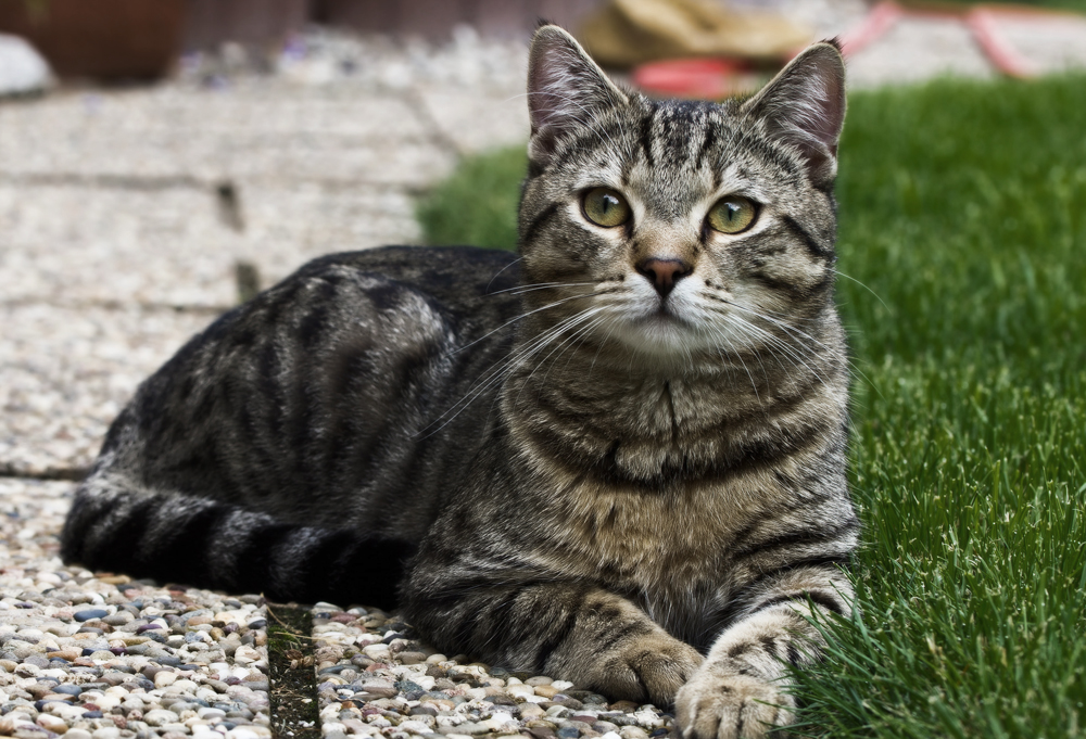Корм для кошек Леонардо - обзор