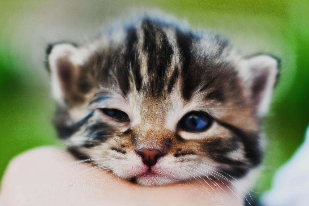 Когда котята открывают глаза после рождения?