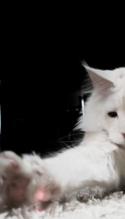 Лазерная указка для кошек - игрушка или угроза?