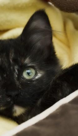 Паразиты у кошек: симптомы и лечение