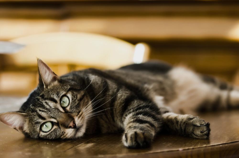 Как_отучить_кота_лазить_на_стол_Christophe_Hallez