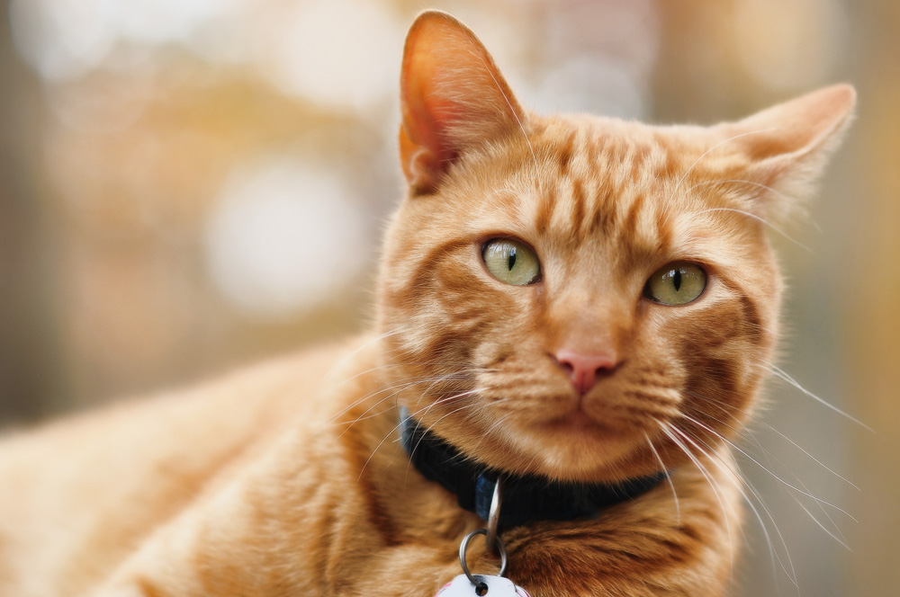 Разнообразные окрасы кошек