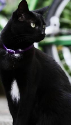 Как выбрать хороший ошейник для кошки?