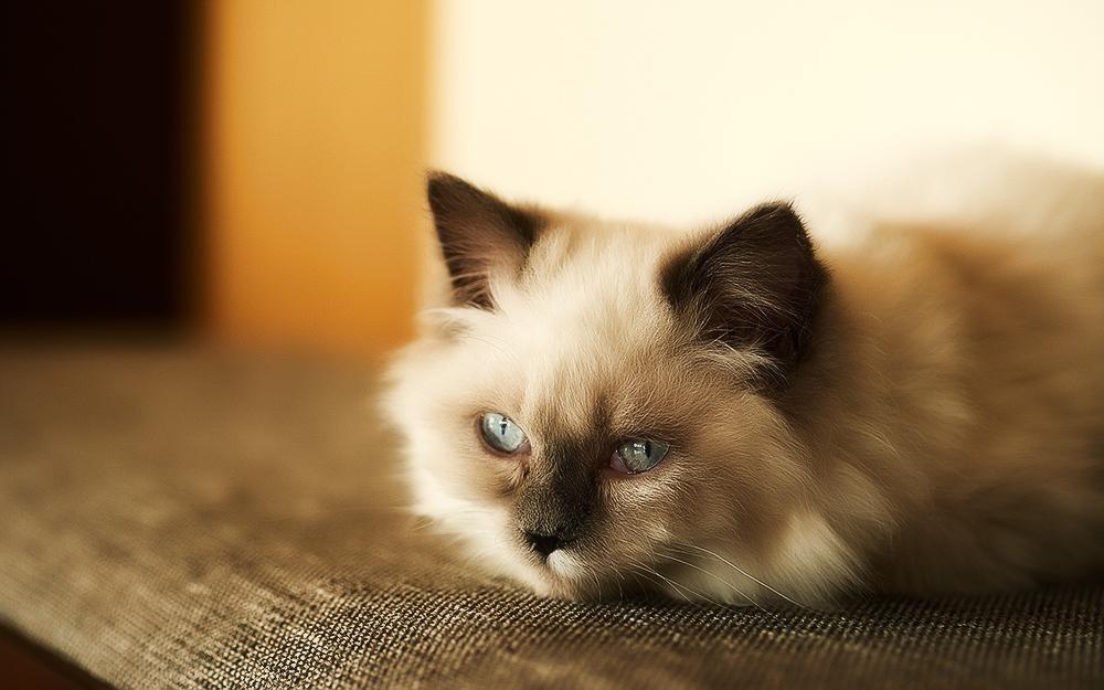 Симптомы заболеваний у кошек, их лечение