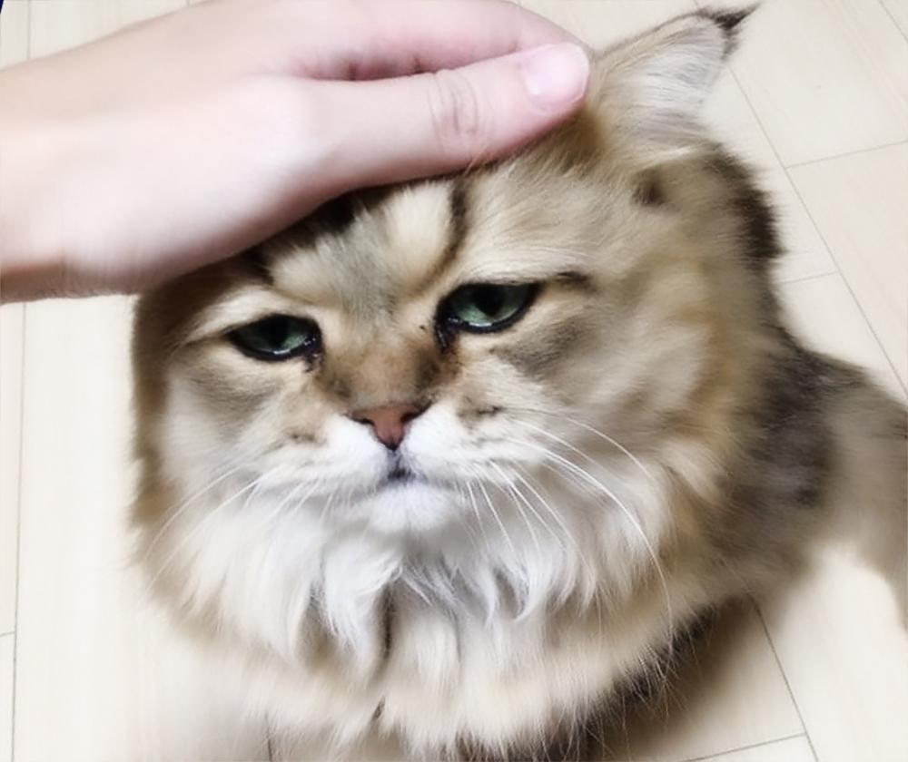 Болезни кошек - некоторые общие симптомы и лечение