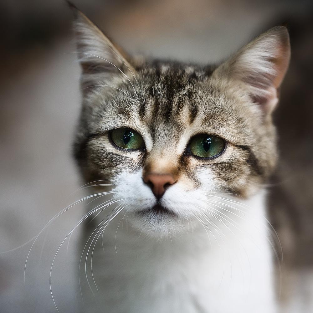 глисты у кошек как проявляется