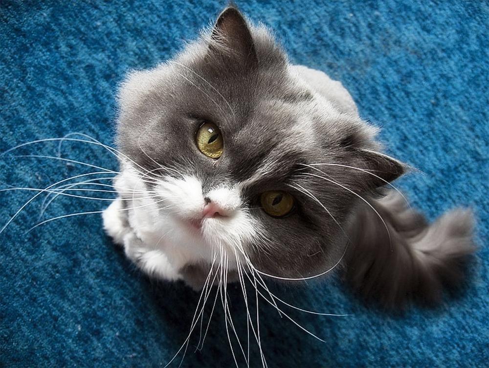 Симптомы мочекаменной болезни у кота