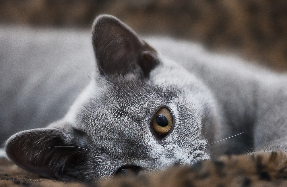 Имена для серых котят