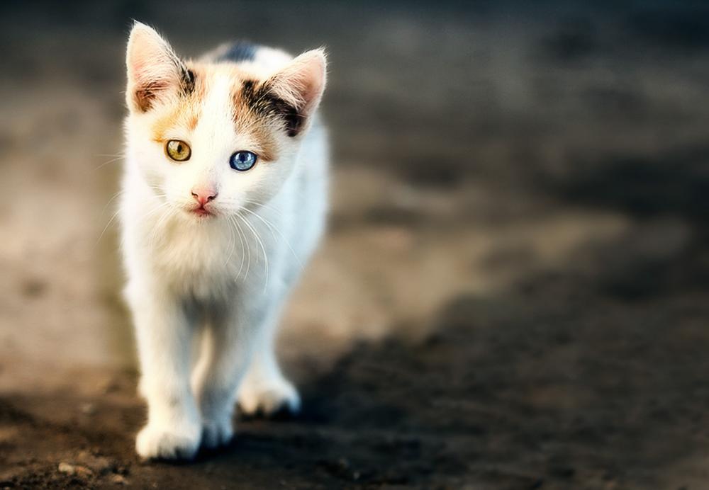 Признаки заражения у котят