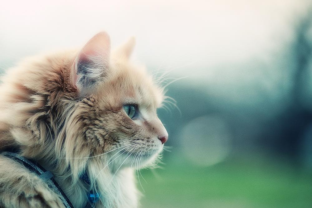 Из чего состоят диеты для котов?