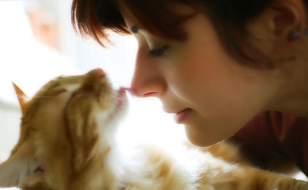 Как лечить запах изо рта у кошки?