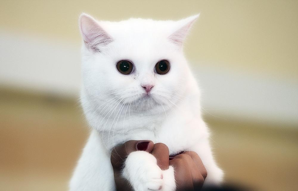 Уход за ушками, когтями и глазами котят