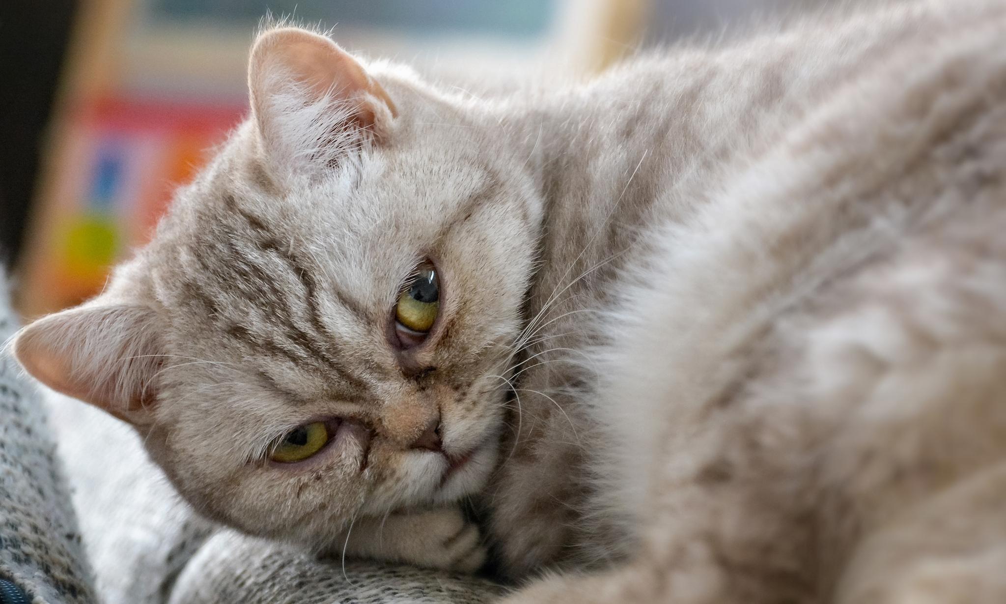 Нефропатия у кота симптомы
