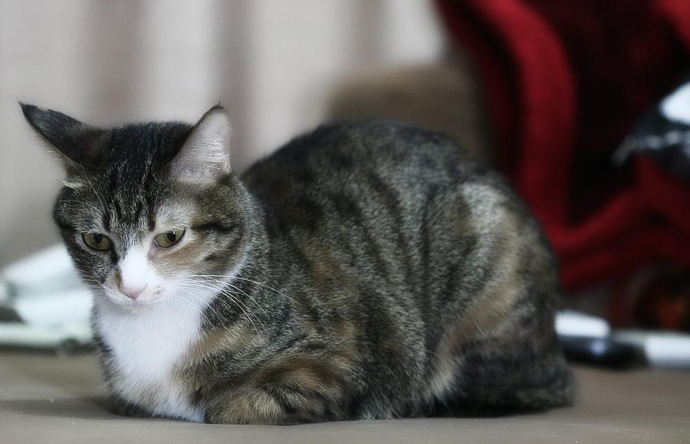 У кота перхоть на спине