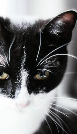 Как правильно чистить уши котенку или кошке. Болезни ушей у кошек. Чем почистить уши котенку в домашних условиях: советы.