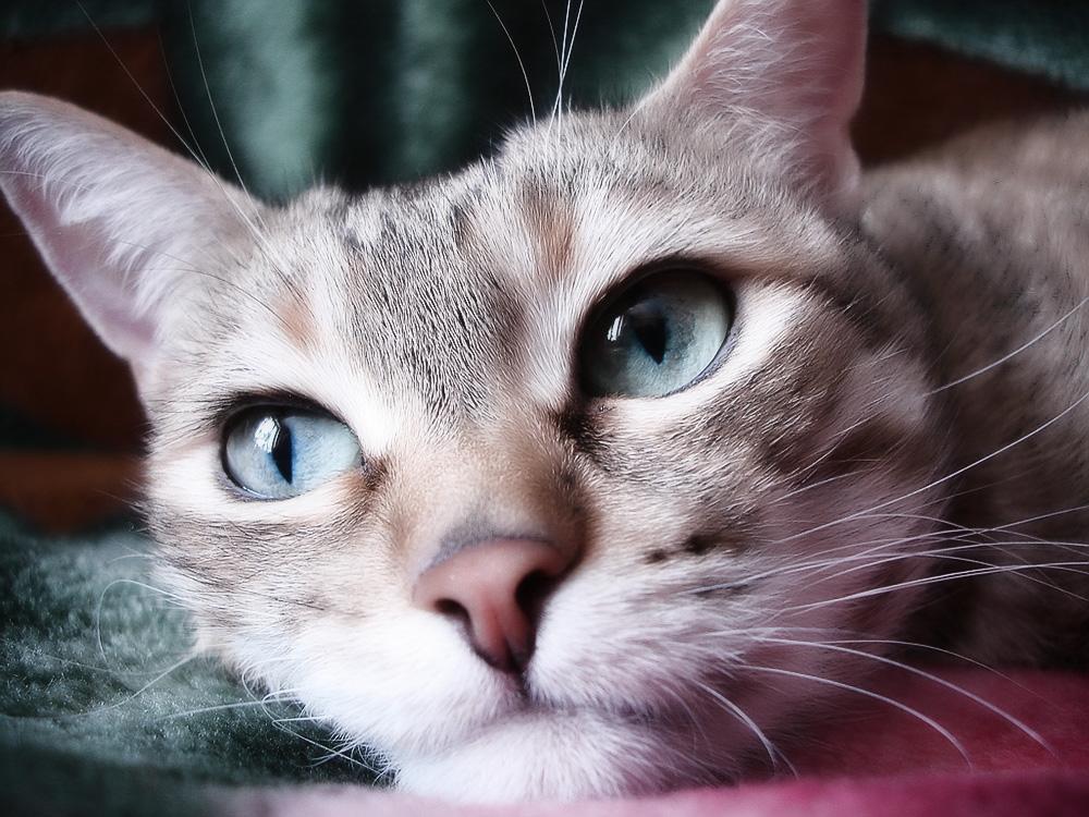Чем лечить кота от инсульта