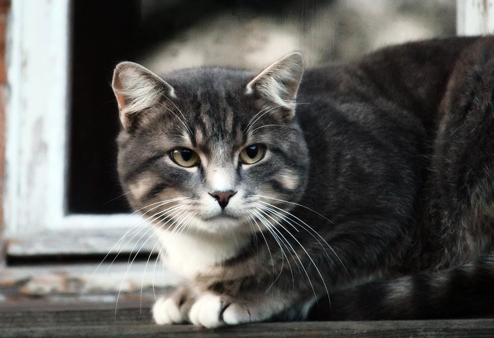 Кот часто ходит в туалет по-маленькому - причины и лечение