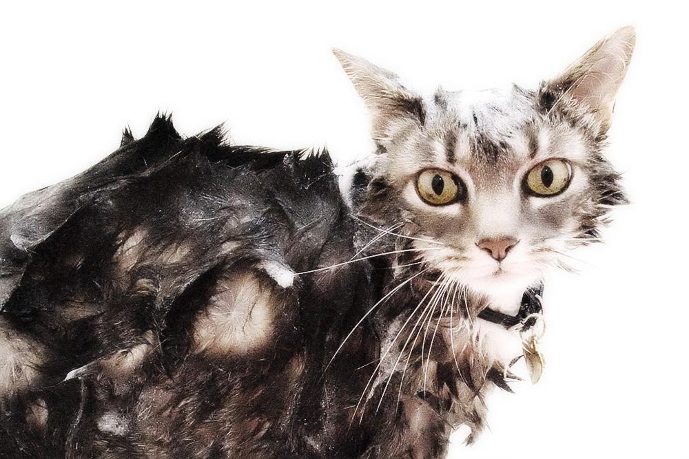 барс от блох инструкция для кошек