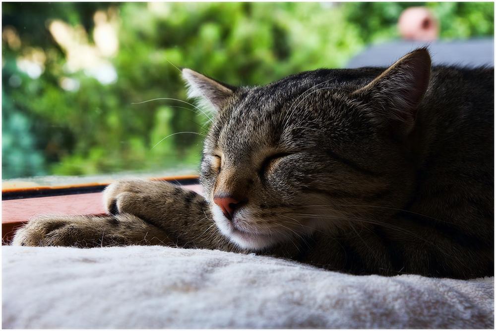 Опухоль у кошки на животе: диагностика и лечение
