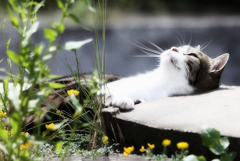Авитаминоз у кошек: симптомы и лечение