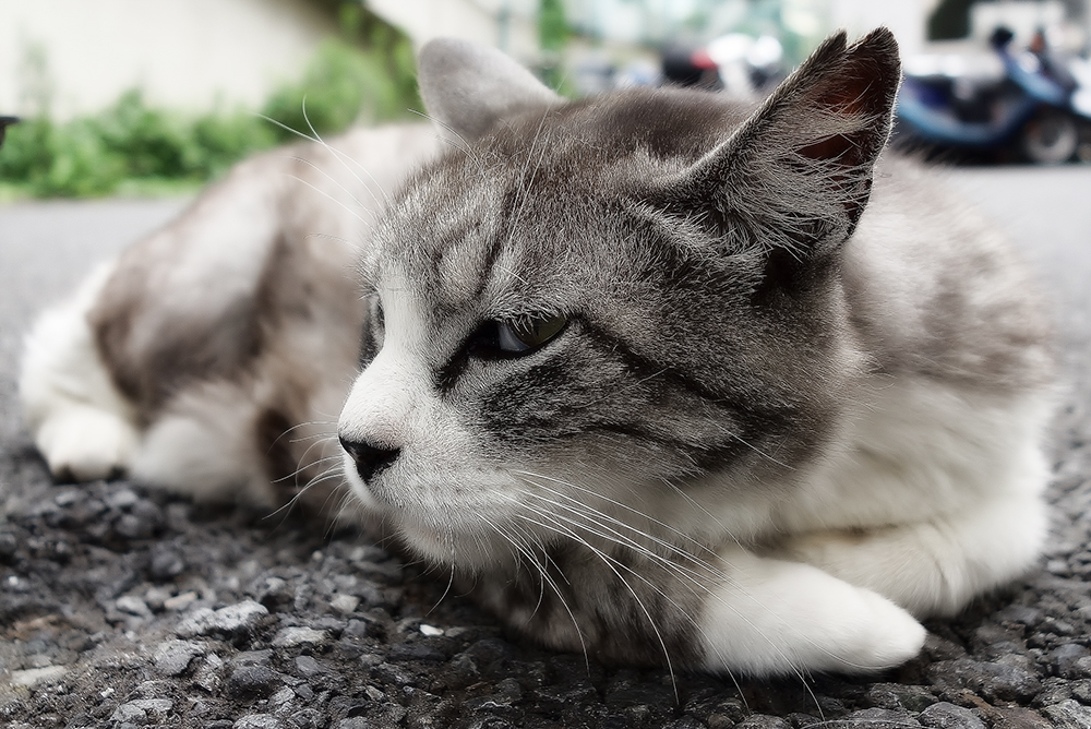 Что делать, если кошка чихает и у нее слезятся глаза?