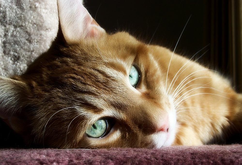 Когда кота рвет зеленой жидкостью