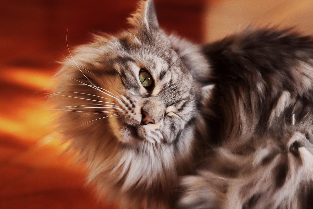 Средство от лишая у кошек