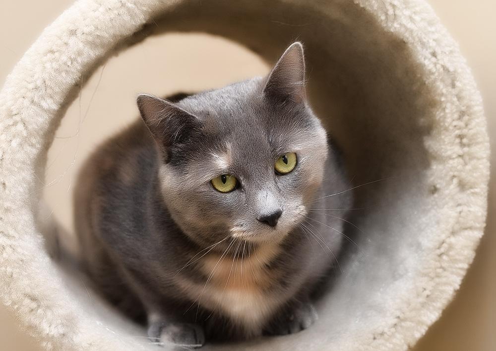 Кашель у кошки: причины, лечение