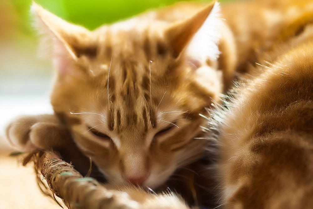 У кошки гноятся глаза