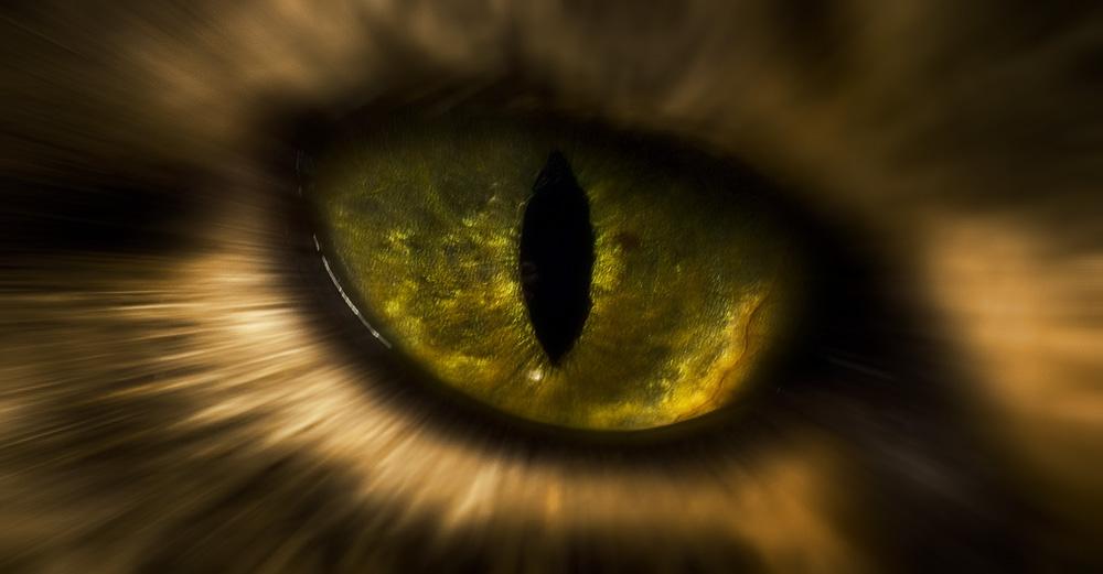 Глазные капли для кошек