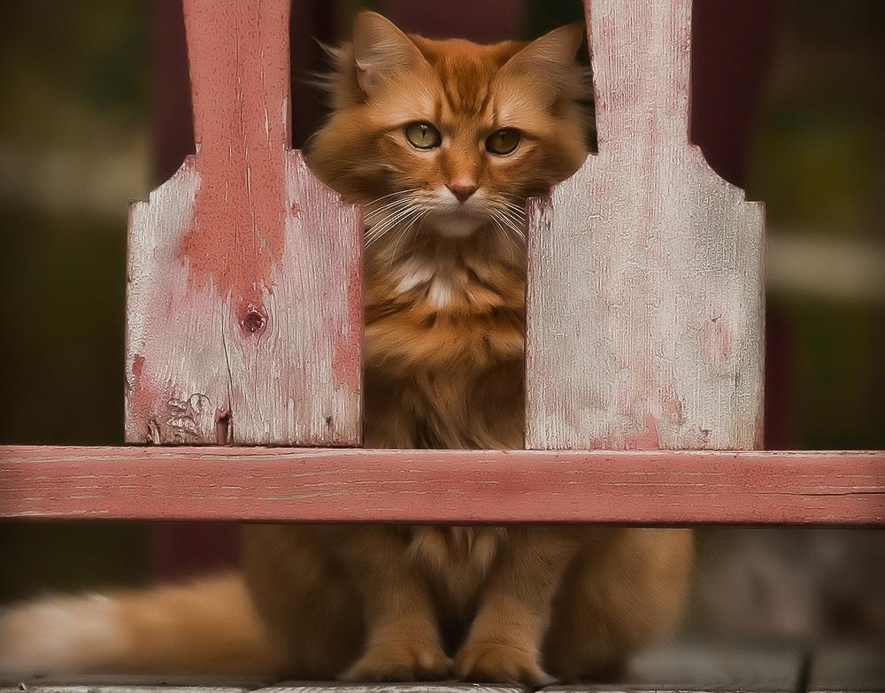 Домик для кошки своими руками