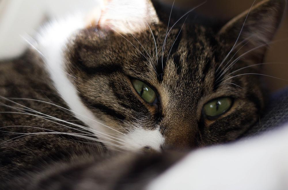 Противоглистные препараты для кошек